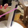 ♀猫こむぎに相手にされず、ルンバに当たる♂猫だいず