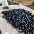ブルーベリーのち山芋