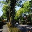 清見台の並木道