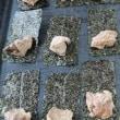 自然薯の磯辺巻