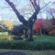 紅葉を歩く小石川後楽園