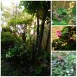 賑やかなお庭(*^。^*)