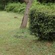 家の周りの草刈りは、どこまで?