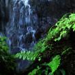 10月16日 秋雨の滝