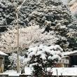 山の雪は溶けていません、天気は晴れ、気温は零下3度