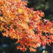 金沢の秋2017-7 兼六園 ① 桂坂口、桜が岡エリア