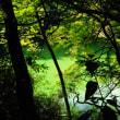 三四郎池を周遊するー1