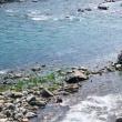 野根川の鮎釣り