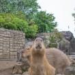 ☆ガンモの群れ〜伊豆シャボテン動物公園〜
