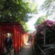 根津神社のツツジ園