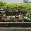 2015年 6月30日 神田上水公園「防犯花壇」植え替え~北四町会 防犯部。