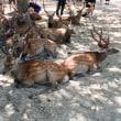 奈良に行ってきました〜♪  とりあえず鹿ばっかり編