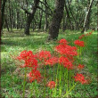 ムクゲとフヨウの違い★虹の松原に咲く彼岸花