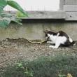 猫は可愛いけれど・・・