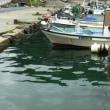 ネンブツダイ (釣査170種目): 日本海の漁港にて 島根釣行④