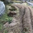堆肥と麦撒き、野菜の成長(更新)