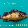 笑転爺の釣行記 4月17日☁☂ 浦賀・久里浜
