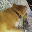 リモコンを枕に?
