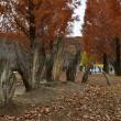 初冬のムーミン谷