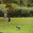 キャンプ@道民の森 自然体験キャンプ場
