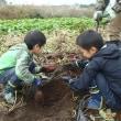 サツマイモ掘り体験&焼いも試食会参加者募集・大物賞(H30年度産新米)もあるよ。