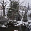 大寒 池の10年