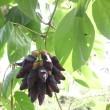 新川川(あらかわがわ)の園芸植物
