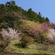 奈良お花見ツーリング