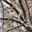 そろそろ冬鳥も移動する時期でしょうか
