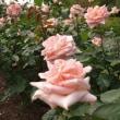 好い香りのバラ園