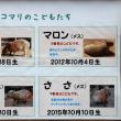 ■冬はギュウギュウな「カピバラ温泉」が最高! ~ 埼玉県こども動物自然公園《カピバラ・ワラビー広場》 ~