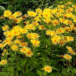 鮮やかな歌仙草の花を見て