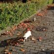 落葉の散歩道