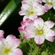 庭の草花(2月)