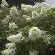 草花の生気が羨ましい・・・夏至