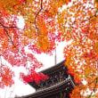 やっぱり京都に行こう、真如堂