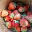 今日のイチゴ