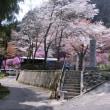 桜巡り一周サイクリング