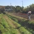 デュラム小麦・ヘアリーベッチの播種