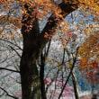 冬桜咲く桜山公園へ