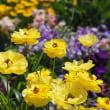 横浜里山ガーデンの花風景2