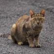 16日の散歩 ( 御霊神社往復で、芙蓉と猫と水 )