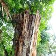 きになる木