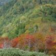 剣山の黄葉1