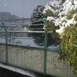 東京都大田区の積雪状況と私の感情変化の推移(最終報告)・・・平成30年1月22日(大安)