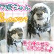 美犬姉妹♪ショコラモカちゃん・姫ちゃん