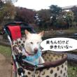介護中の「ナナさん」久しぶりの千葉公園
