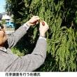 佐橋紀男氏のスギ花粉着床状況フィールドワーク2018