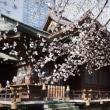 2018.03.22 西新宿 熊野神社: 染井吉野は三分咲き!