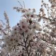 禁煙2873日目 「春爛漫」